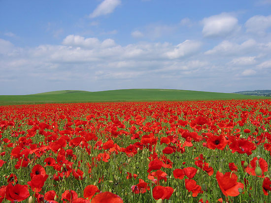 School pupils will plant poppies on the graves of soldiers buried at St Nicholas Church, Sutton