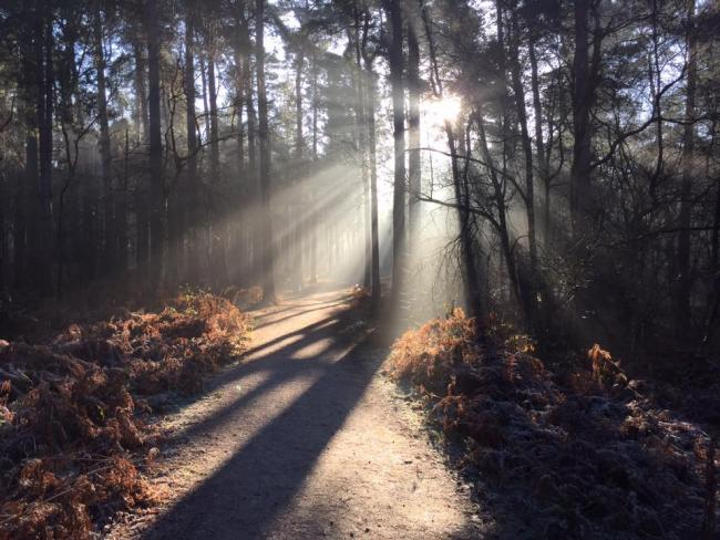 Delamere Forest has now closed its recreation facilities