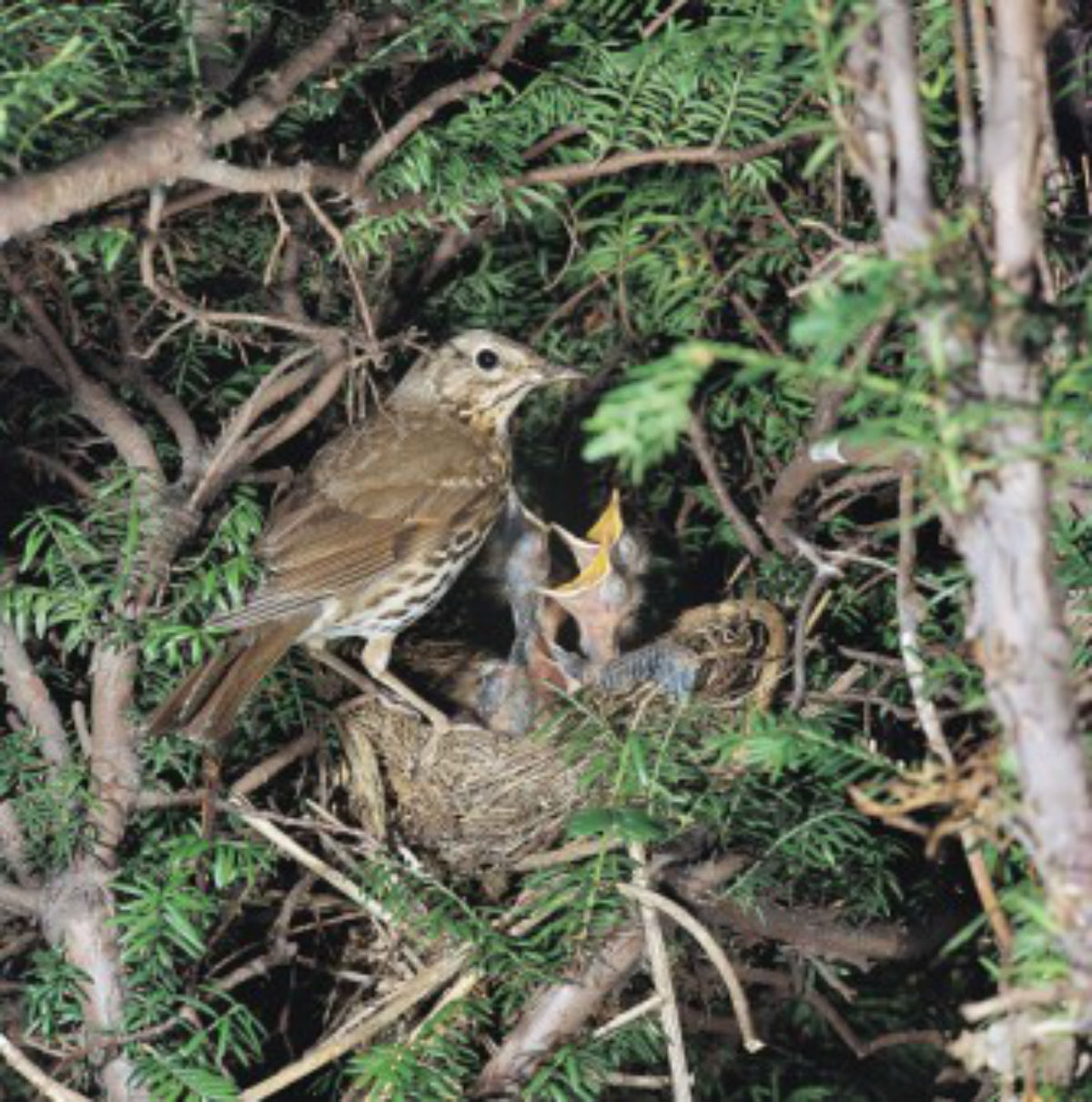 Keep away from baby birds says RSPB