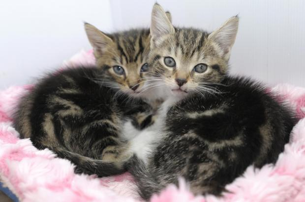 St Helens Star: Disgusting! Kittens dumped between bins and cardboard boxes