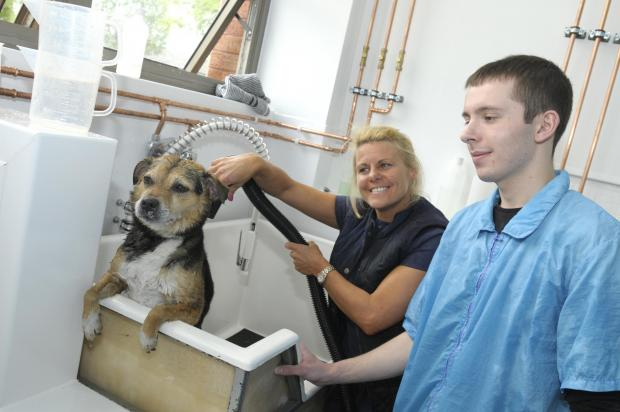 Pepper the dog looks unimpressed after getting a wash, thanks to Leigh Hankison and Dawn McKenna        IPL30514
