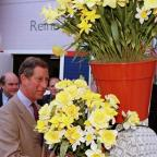 St Helens Star: The Prince of Wales has a fondness for daffodils