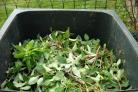 Website launched for green waste subscription