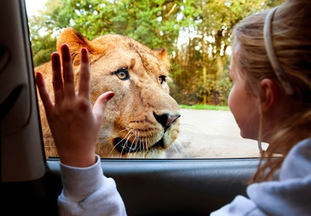 Kids go half price at Knowsley Safari this half term
