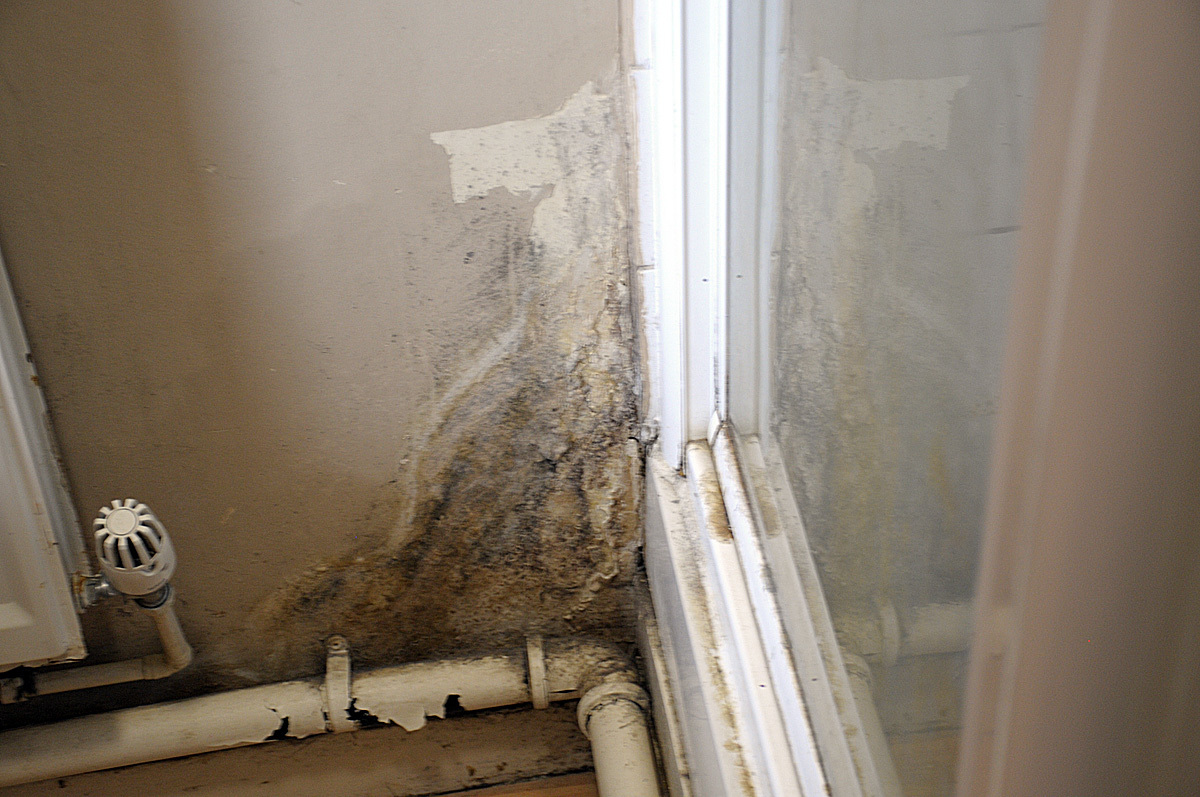 Renters will have the power to take their landlord to court over damp and mould in their home under new laws